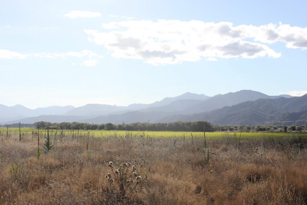 New Zealand Wine Region Image