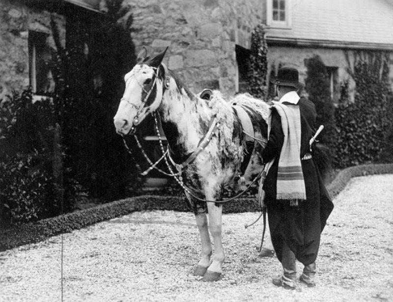 Tschiffeley's horse