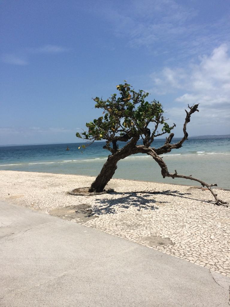 The island of Itaparica on the Atlantic coast in Bahia